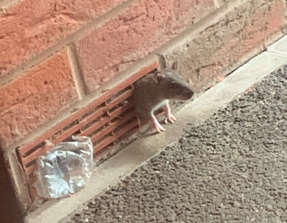 Stop Mice Entering Home