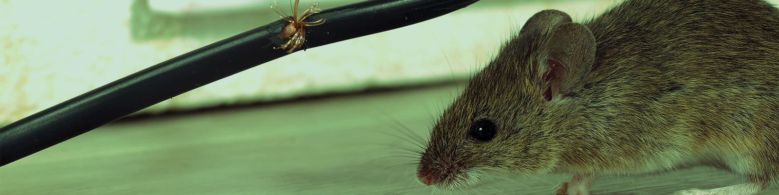 Pest Control Professionals on the Front Line